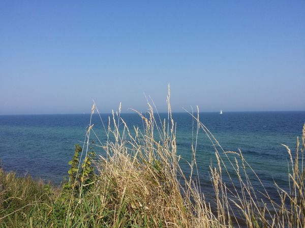 Horizon Over Water Grass Sea Plant Blue Growth Water Clear Sky Tranquil Scene Scenics Tranquility Nature Beauty In Nature Non-urban Scene Day Shore Seascape Outdoors Ocean Sunbeam