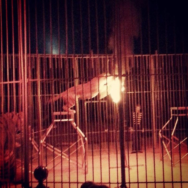 El Tigre pasando por el Aro de Fuego