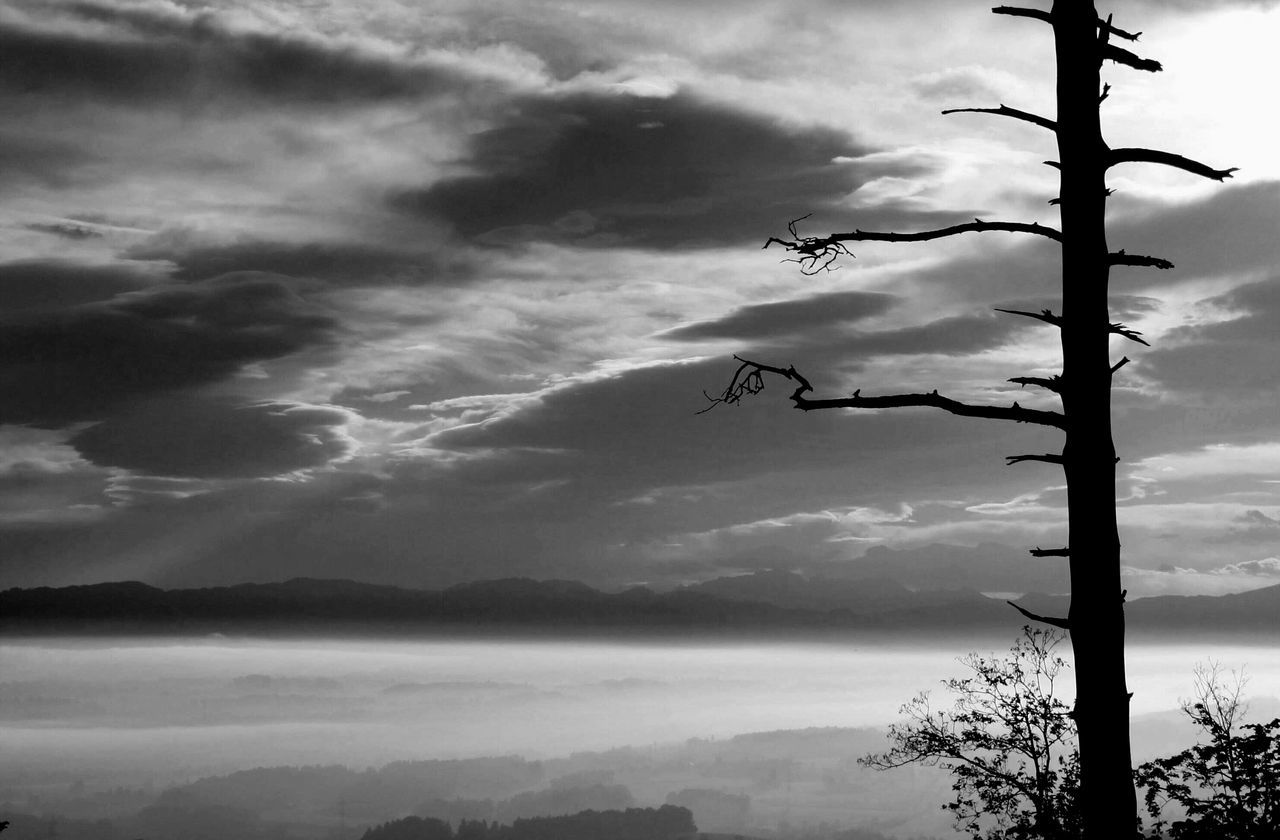 sky, cloud - sky, nature, outdoors, tree, no people, beauty in nature, silhouette, animal themes, animals in the wild, day, bird, flying, scenics, mountain, spread wings