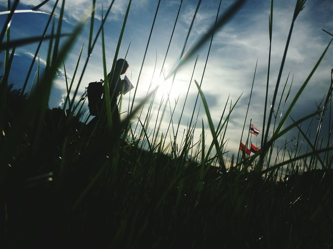 field, grass, growth, nature, silhouette, plant, agriculture, sky, outdoors, day, beauty in nature, one person, people