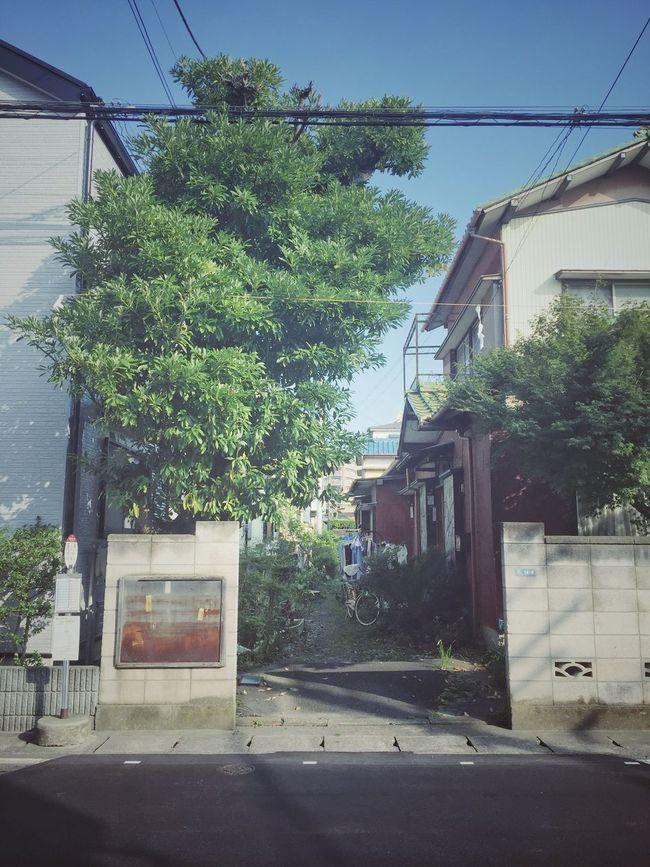 Japan JapanLife Oldhouse Character Morning