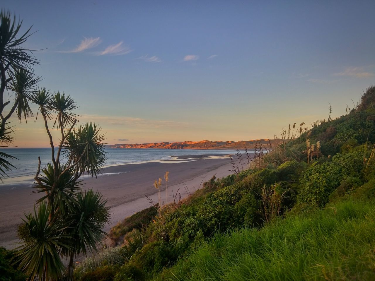 😍all to myself😍Magic Hour Dusk Travel Destinations Outdoor Photography The Great Outdoors - 2016 EyeEm Awards Elevated View Tranquil Scene My Point Of View Raglan Nz New Zealand Landscape The KIOMI Collection Breathtaking View Nature Ocean Beach Cabbage Tree Colour Image Lifes A Beach Showcase March West Coast Wild Swimming Surfing Boogieboarding Landscapes With WhiteWall