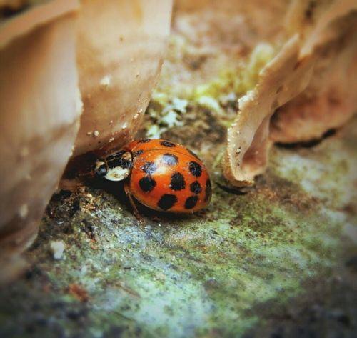 Eyeemphoto Eyeemweekly Ladybug Littlelady Thesmallestlittlethings Happigramma EyeEm Best Shots Nikon Photography Nikonphotography EyeEmbestshots Summertimesplendor Nikonnation Picturesareeverywhere