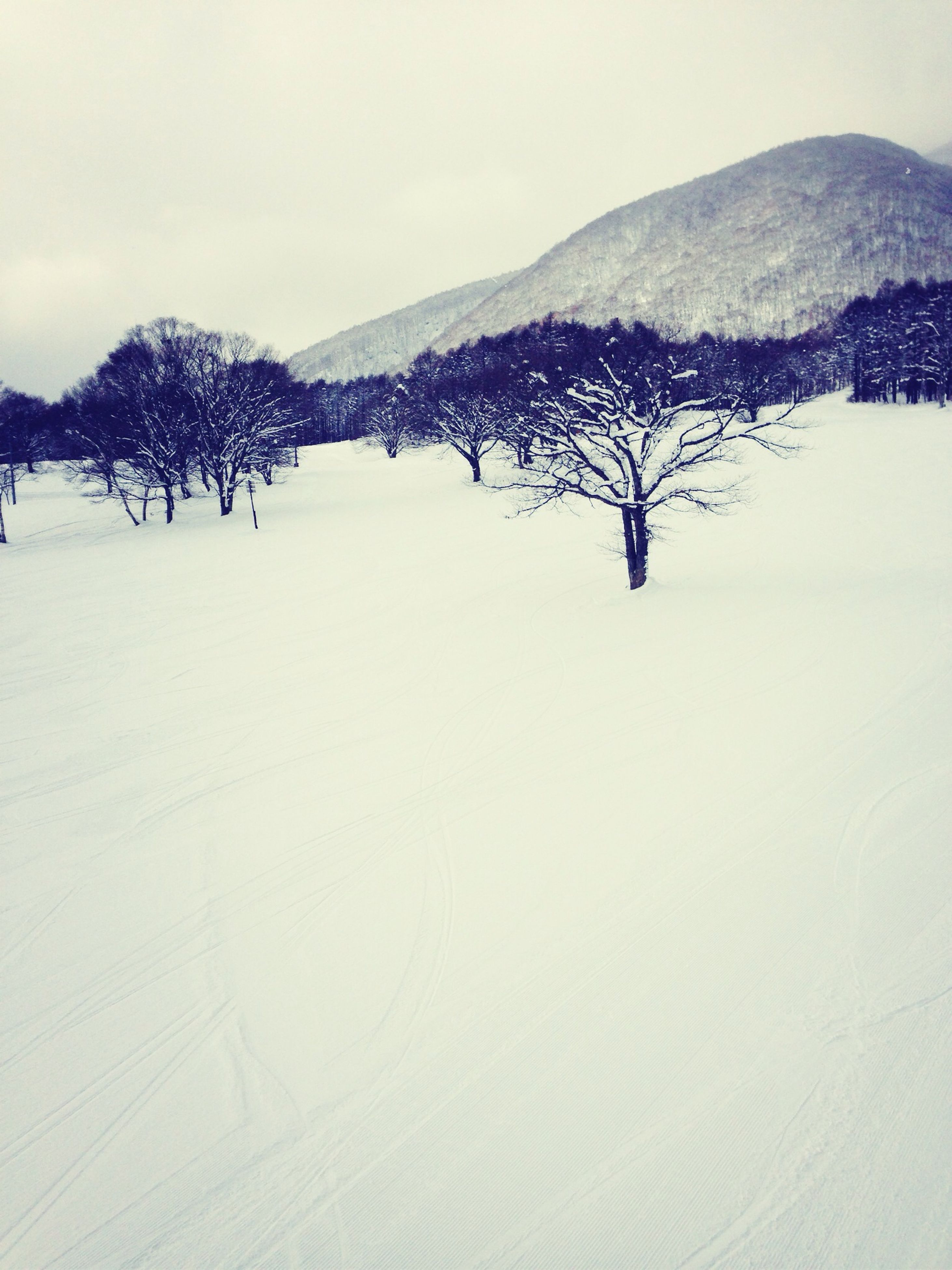 snow, winter, cold temperature, season, weather, covering, tranquil scene, tranquility, landscape, scenics, mountain, beauty in nature, nature, tree, bare tree, clear sky, white color, snow covered, mountain range, covered