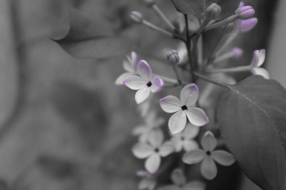 Sunshine Flowers Mono Monochrome Monopurple X100t Fujifilm FujiX100T Landscape Daily