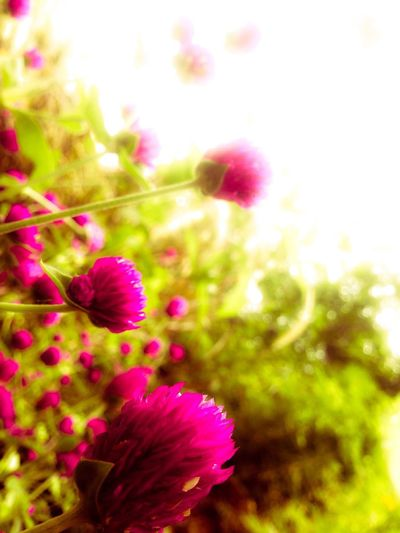 You Name It Flower Nature Growth Beauty In Nature Plant Purple Pink Color Fragility Petal Freshness No People Outdoors Flower Head Day Close-up