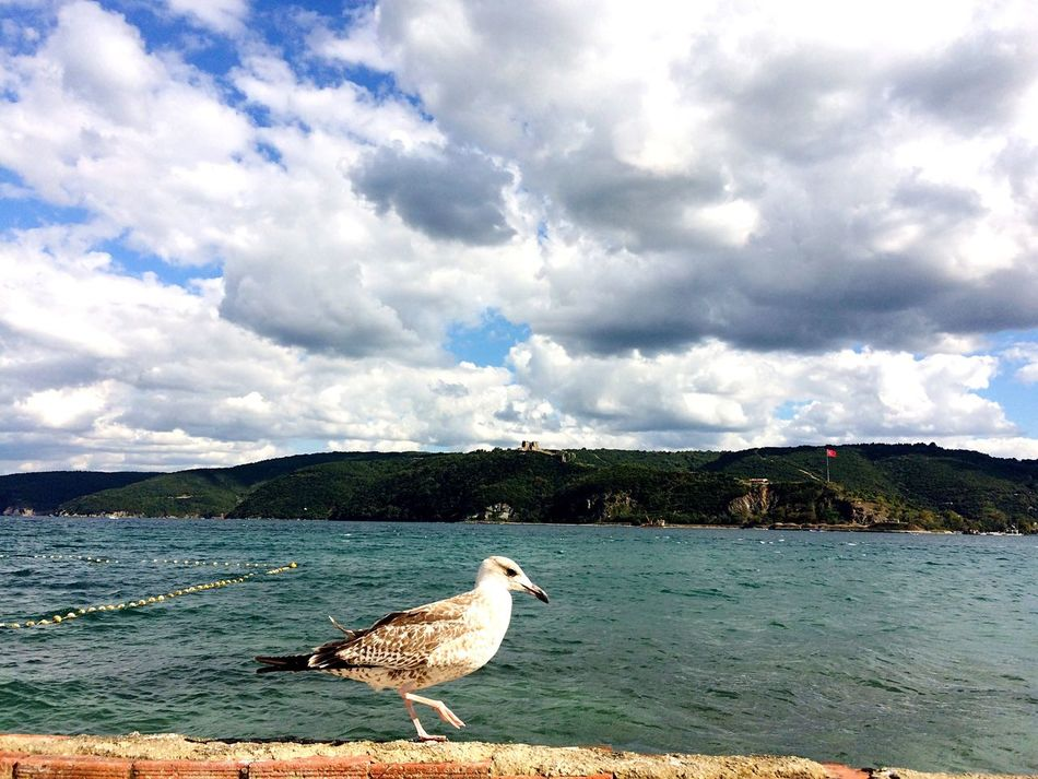 Followme Likeforlike Bird Animal Themes One Animal Wildlife Animals In The Wild Seagull Sea Beach Water Nature Cloud - Sky Tranquility Perching Tranquil Scene Cloud Like