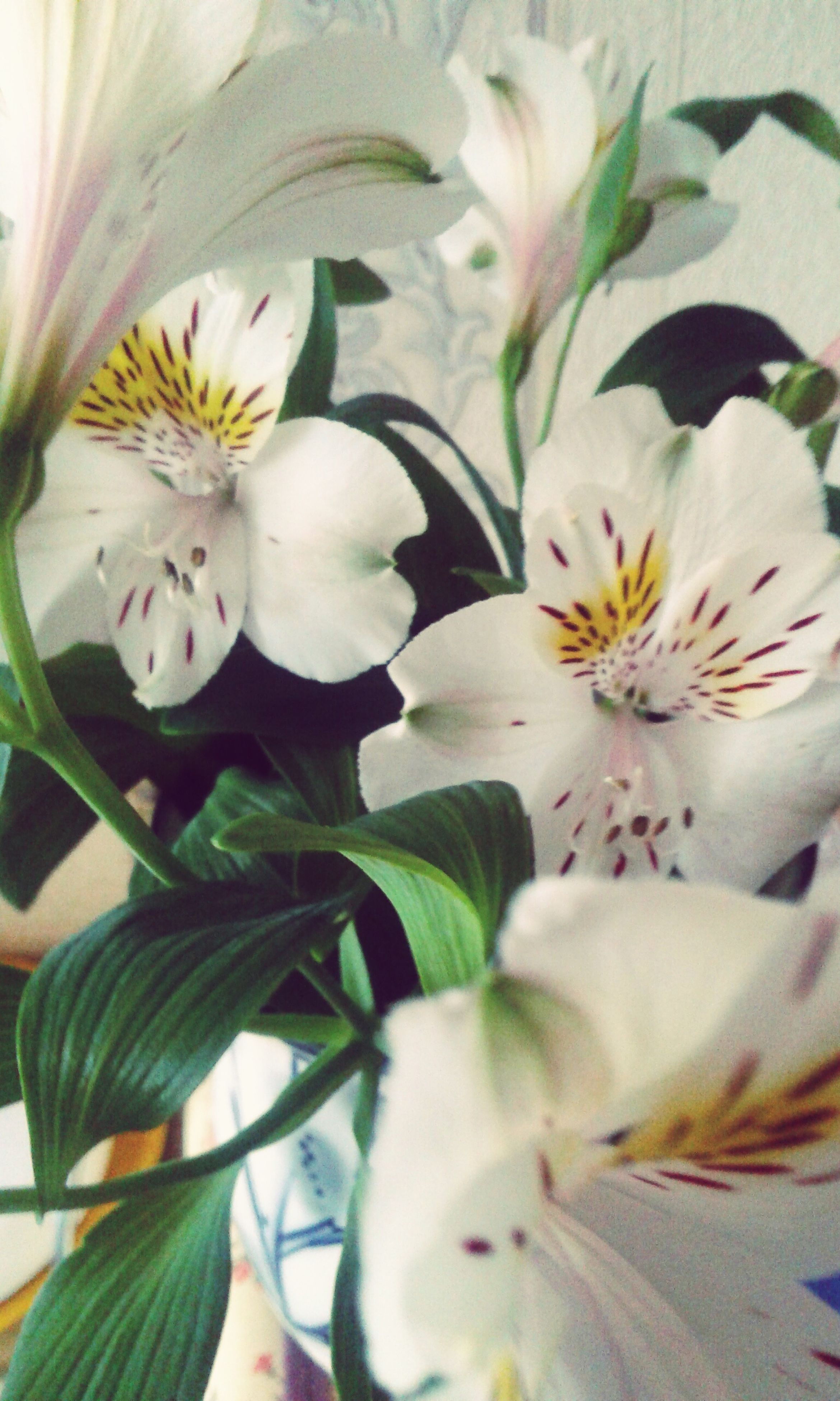 flower, white color, petal, indoors, fragility, flower head, growth, freshness, close-up, pets, nature, plant, beauty in nature, leaf, white, blooming, day, no people, domestic animals, home interior