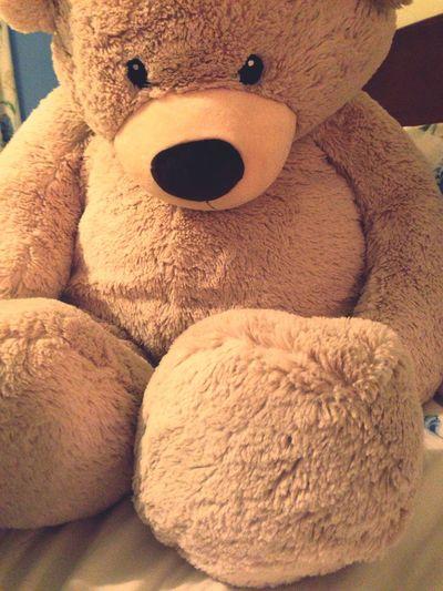 teddy<3