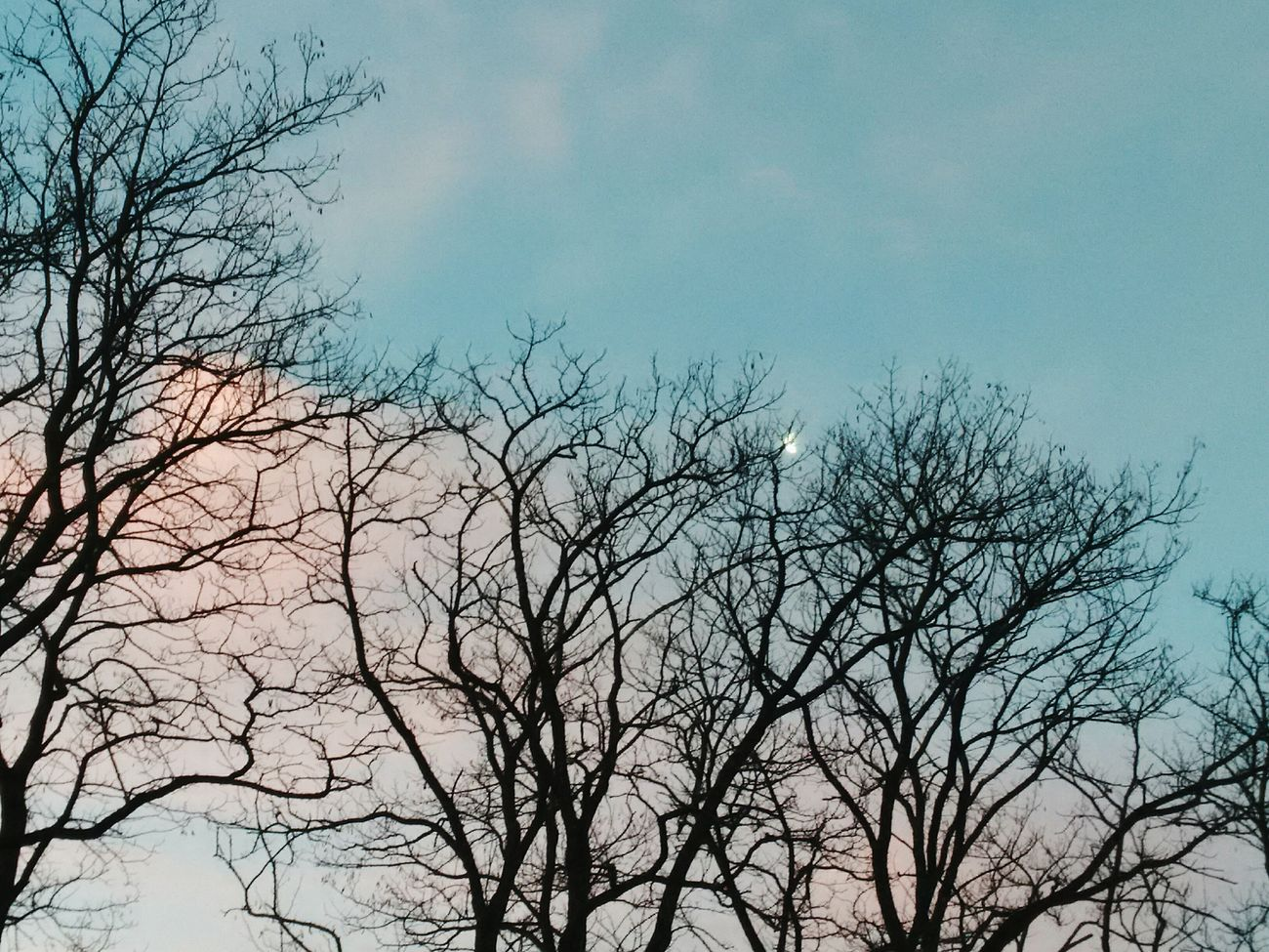 Arbre Lune Ciel