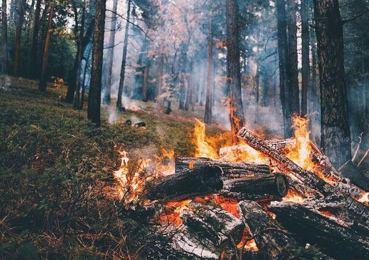 Good Morning Day Awake Sunrise Fire - Natural Phenomenon Forest Burning Flame Nature Heat - Temperature Tree Forest Fire Bonfire Outdoors No People Smoke - Physical Structure Beauty In Nature First Eyeem Photo