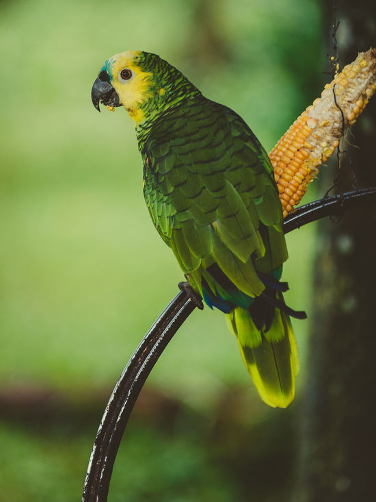 Animal Themes Animal Wildlife Animals In The Wild Beauty In Nature Bird Focus On Foreground Green Color Misiones, Argentina One Animal Parrot
