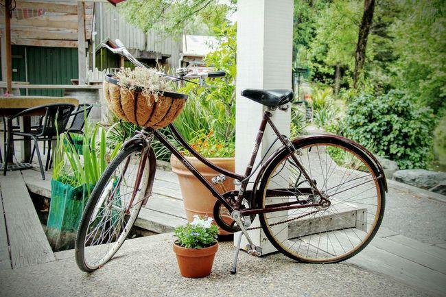 Bike Vintage Bike Bicycle Matakana  Vintage Bicycles