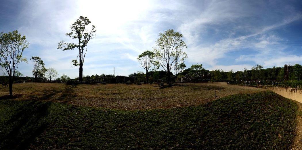 African Savanna Panorama CAMERAtan!!
