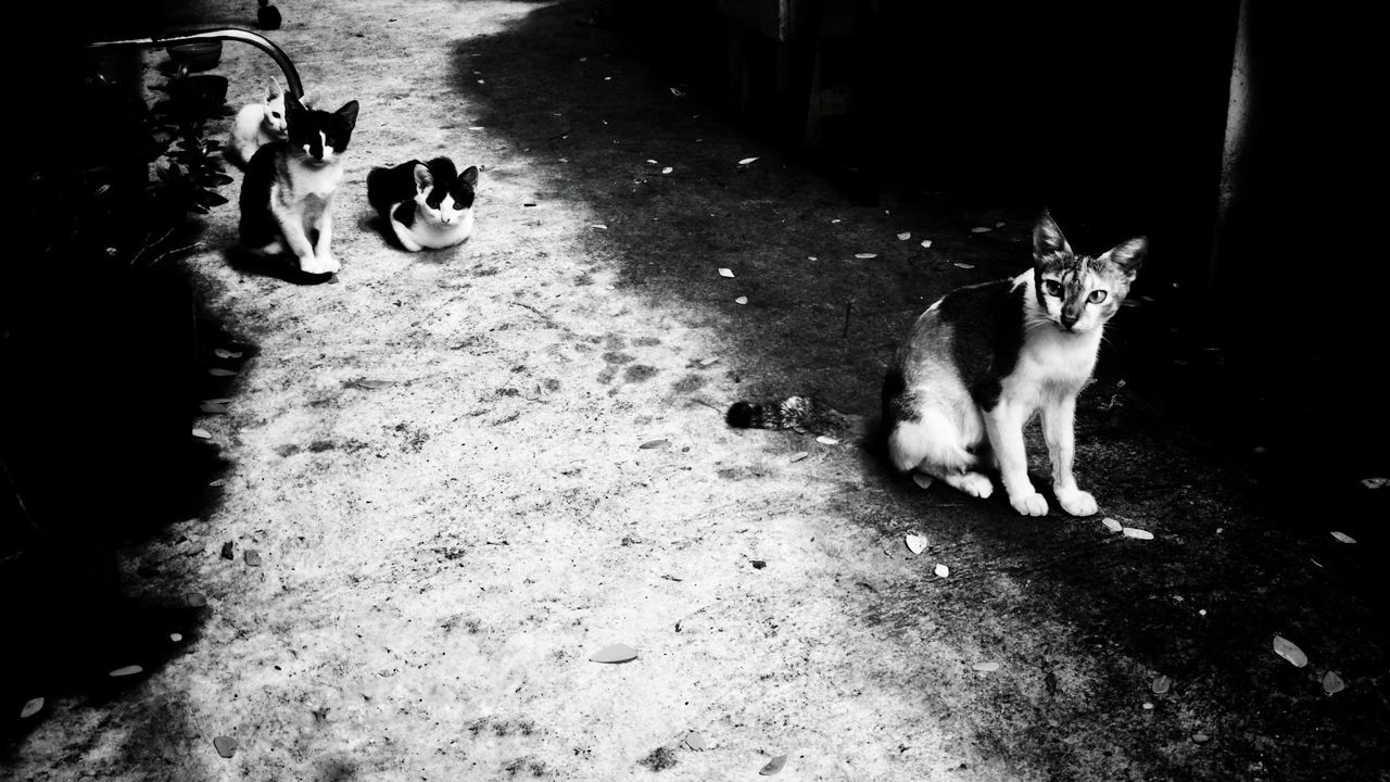 The family of cat Outdoors Pets Cat Photography Cats Blackandwhite Portraitofcat