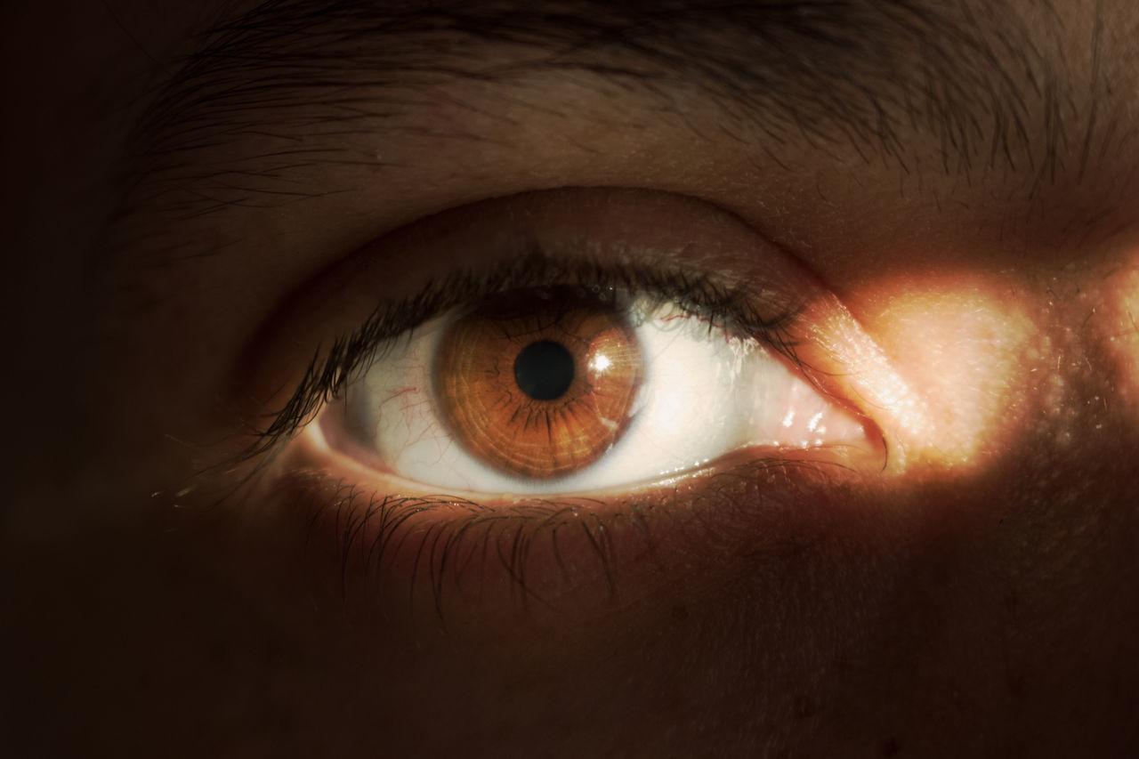 Black Bright Brown Colors Eyes Eyesbrown Light PUPILS Skin
