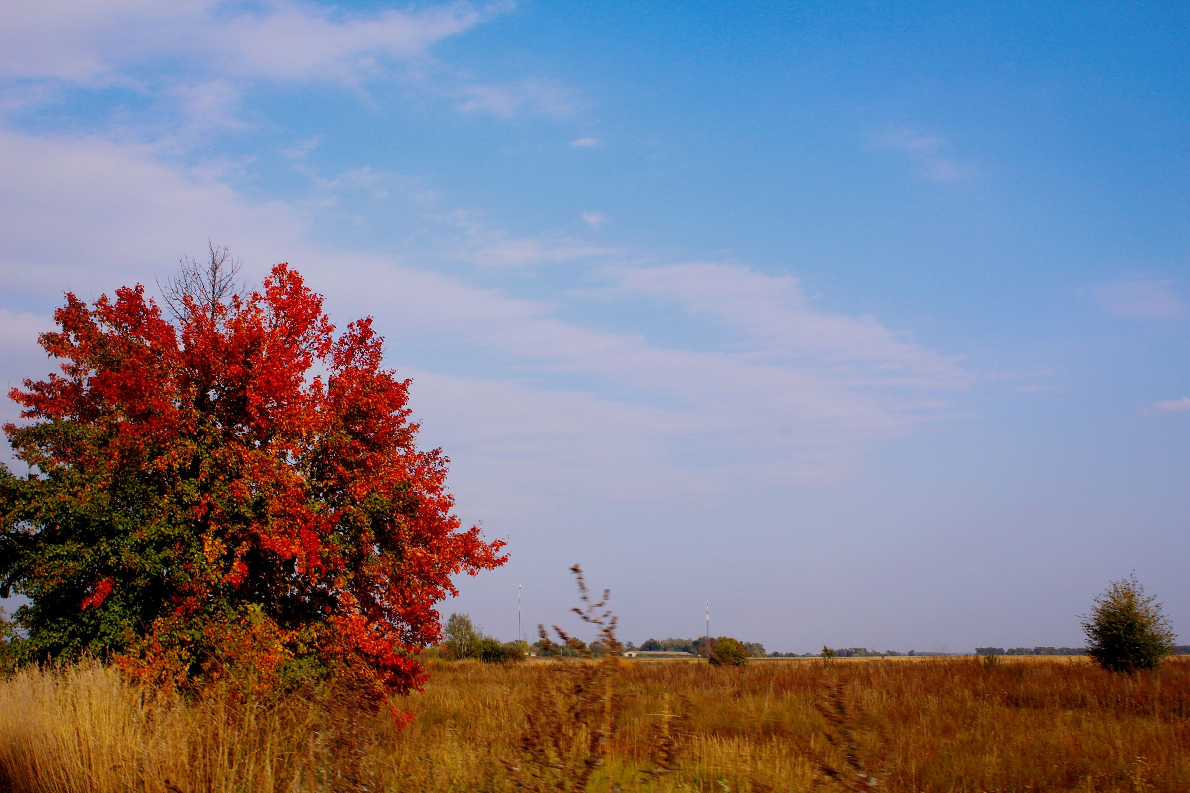 sky, tree, tranquility, tranquil scene, red, beauty in nature, field, growth, landscape, nature, scenics, grass, cloud - sky, cloud, plant, blue, non-urban scene, idyllic, outdoors, day