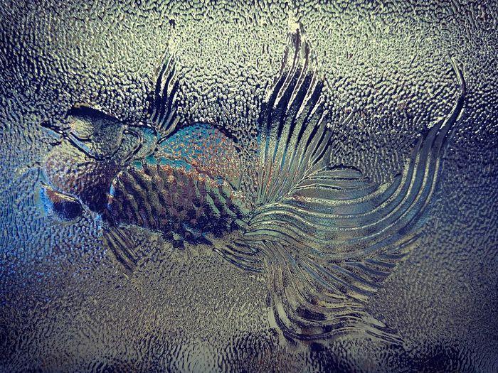 ปลาทอง ทอง Goal Fish Backgrounds Full Frame Abstract Textured  Close-up Pattern Window Frosted Glass No People Car Wash Indoors  Day Water Nature