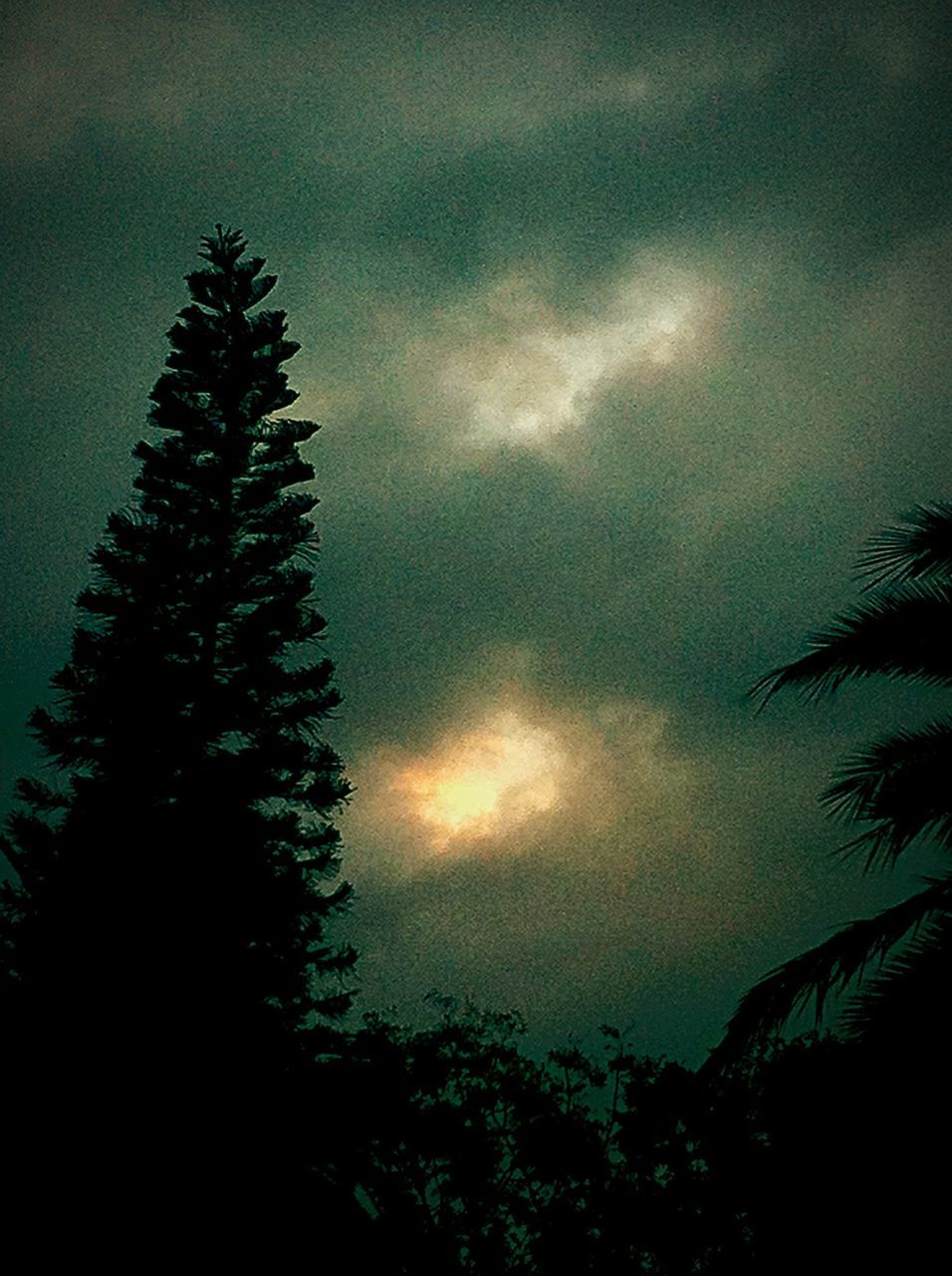 tree, nature, silhouette, low angle view, beauty in nature, sky, no people, growth, outdoors, cloud - sky, tranquility, scenics, sunset, night, palm tree