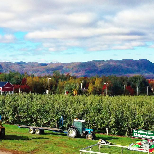 Verger Orchard Pommes Apples Mountain Tranquil Scene Tranquility Landscape Sky Non-urban Scene Cloud - Sky Beauty In Nature Nature Cloud Autumn Colors Autumn Multi Colored Season  Tranquility Outdoors Cloud Tree Montagne Montain  MontYamaska