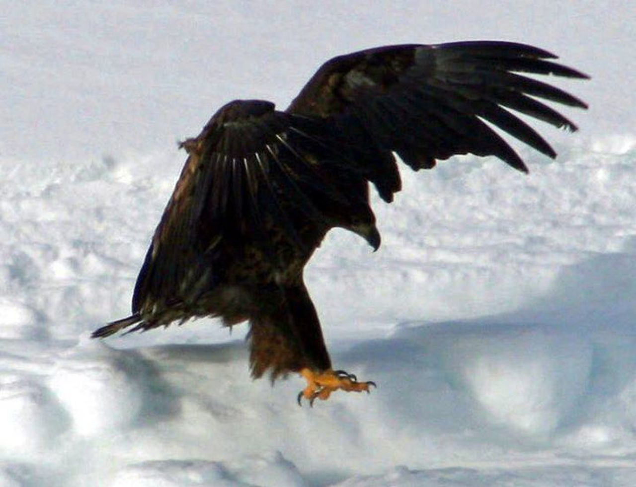 Beautiful stock photos of eagle, Animal Themes, Animals In The Wild, Bird, Close-Up