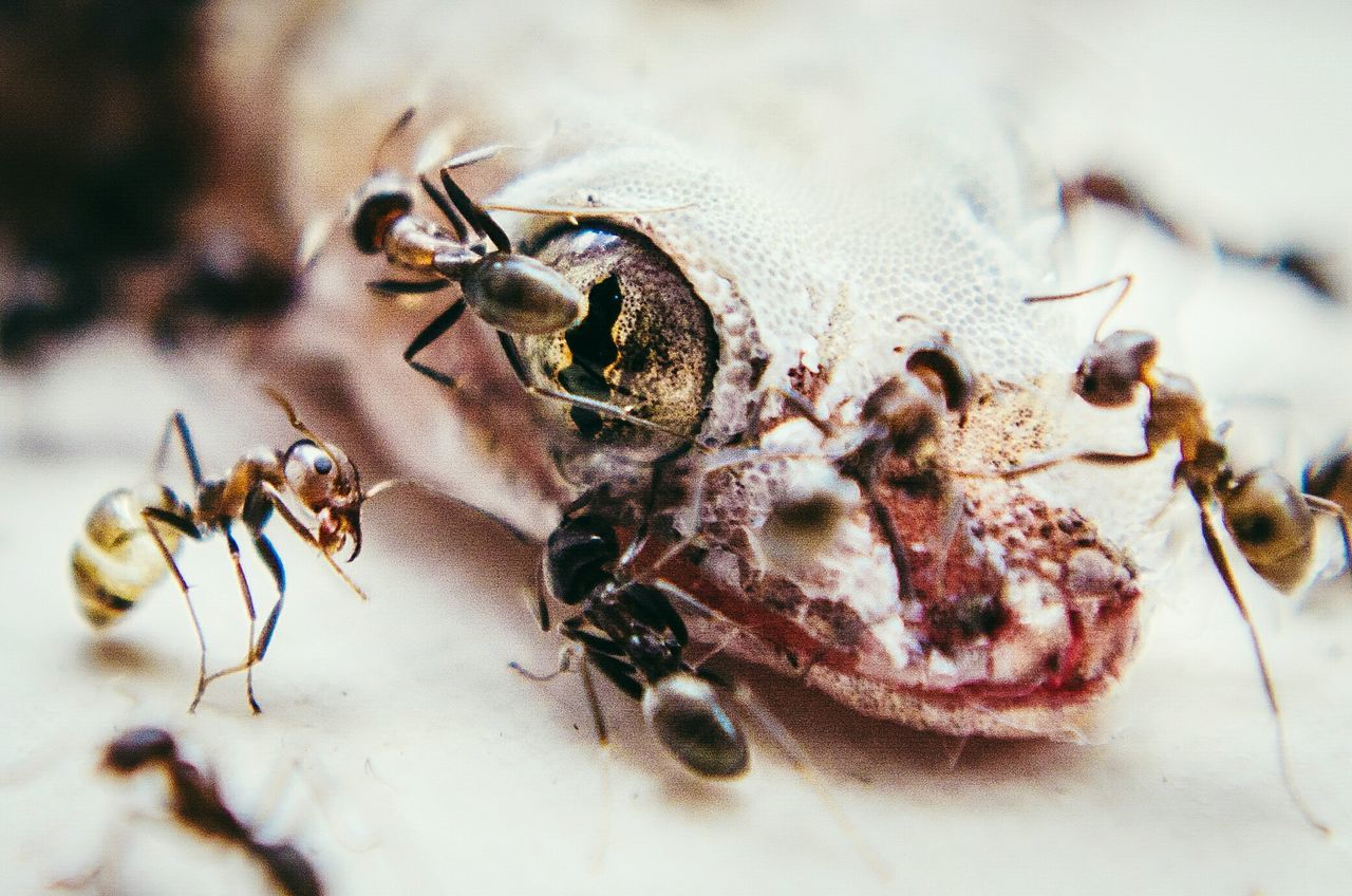 Close-up Insect Ants Close Up Lizard Death Recycling Life And Death In Nature EyeEm Nature Lover Eye Macro Photography Nikon D5100