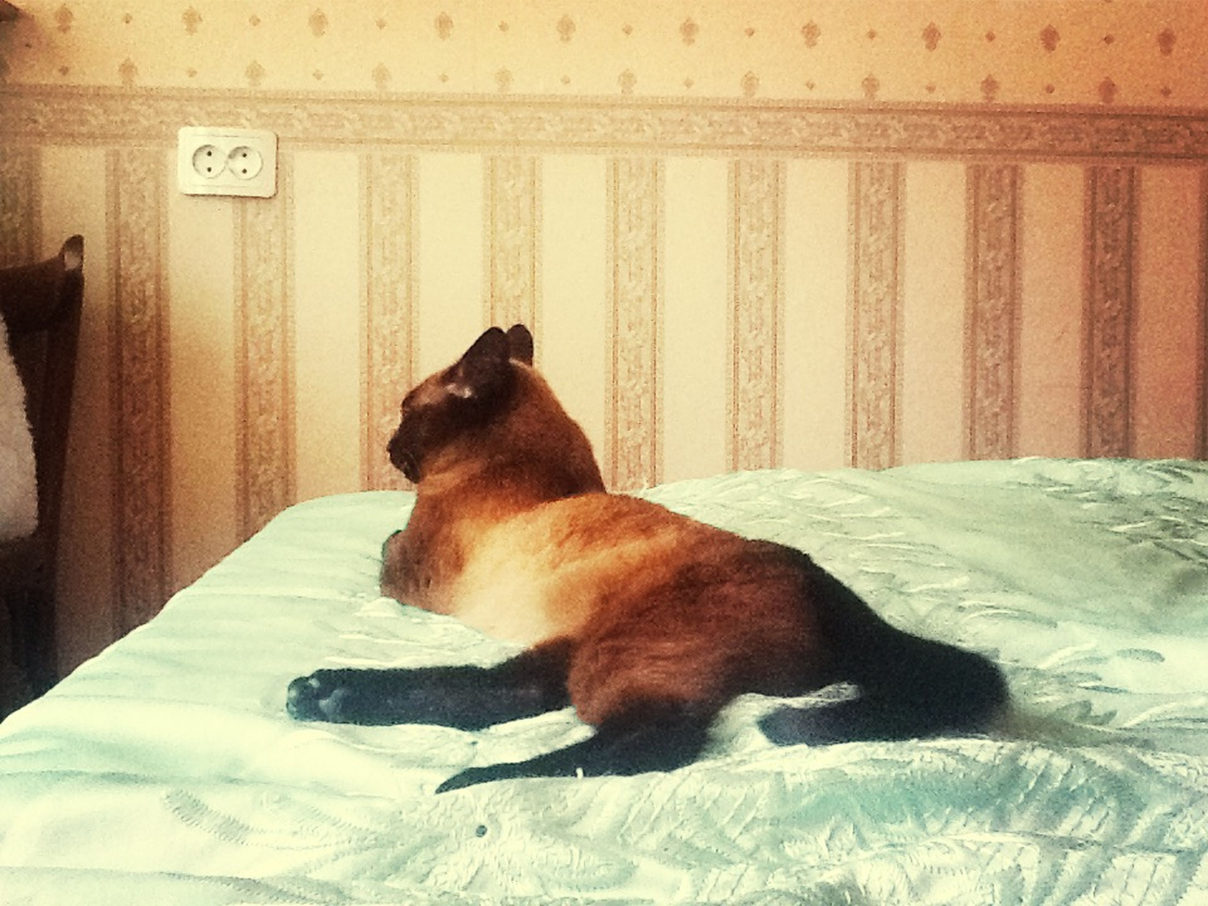 domestic animals, pets, animal themes, mammal, one animal, dog, indoors, relaxation, pet collar, zoology, brown, no people, home interior, domestic cat, animal head, looking away, cat, animal, resting, side view