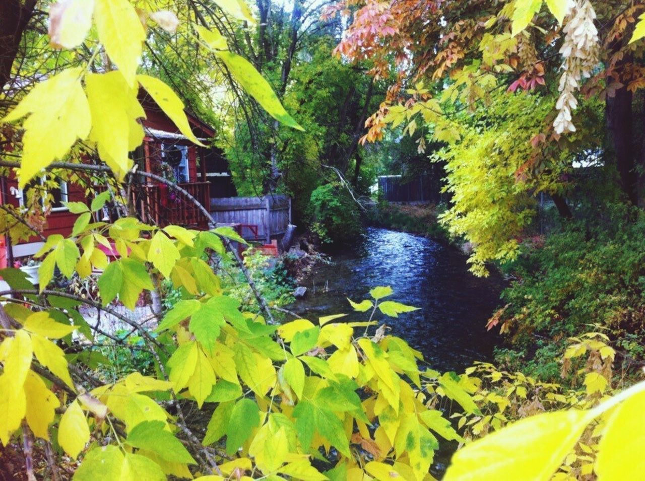 leaf, yellow, tree, growth, autumn, day, nature, outdoors, plant, green color, beauty in nature, no people, built structure, water, architecture, building exterior