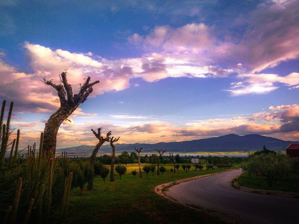 Sunset Tree Cloud - Sky Landscape Agriculture Field Sky NatureNatureporn Sun Nature Photography Sunset_collection Mothernature Sunrise Rural Scene Outdoors Beauty Scenics Beauty In Nature Night No People Galaxy