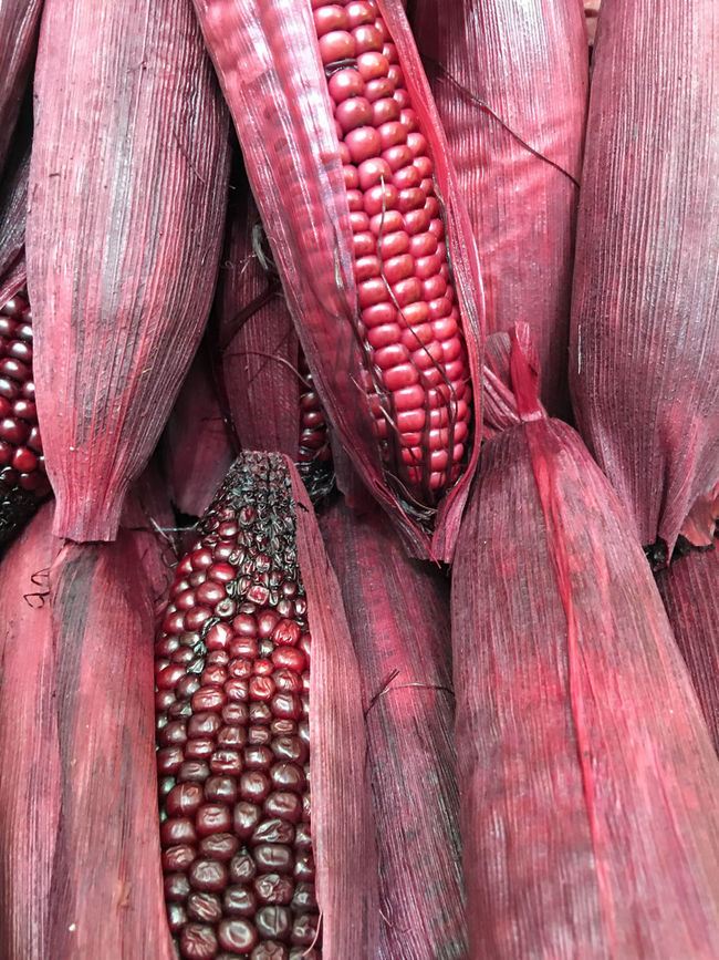 Heap of Corns. Bush Case Casing Chunk Clot Cob Corn Corncob Ear Fiber Food Jacket Kernel Loaf Lump Maize Plant Red Scabbard Sheath Slipcover Tassel Vegetables Vegetarian Violet