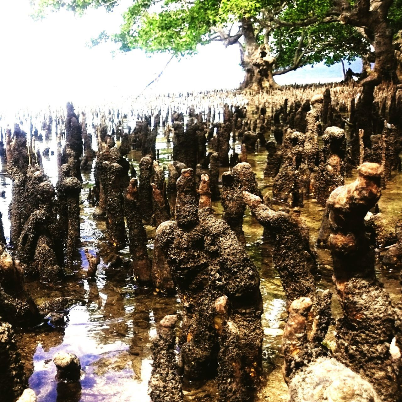 Mangroves Life Mobilephotography
