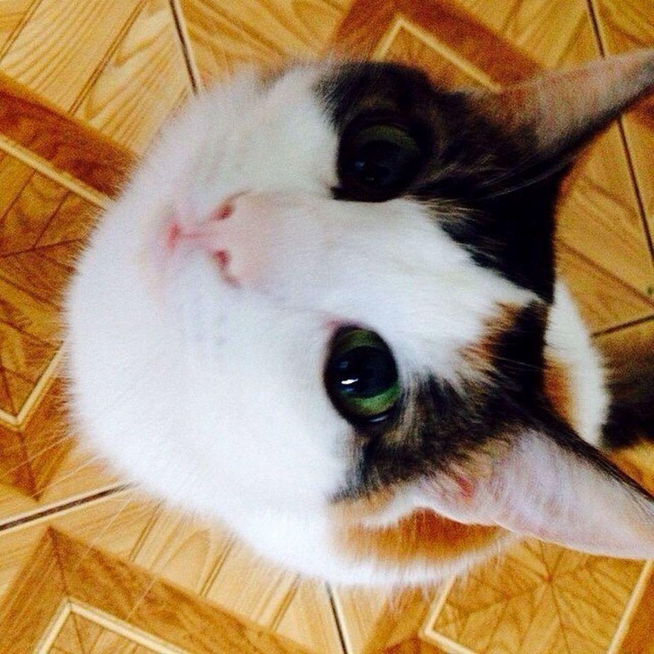 Cats Pets Bestfriend Cat Pet