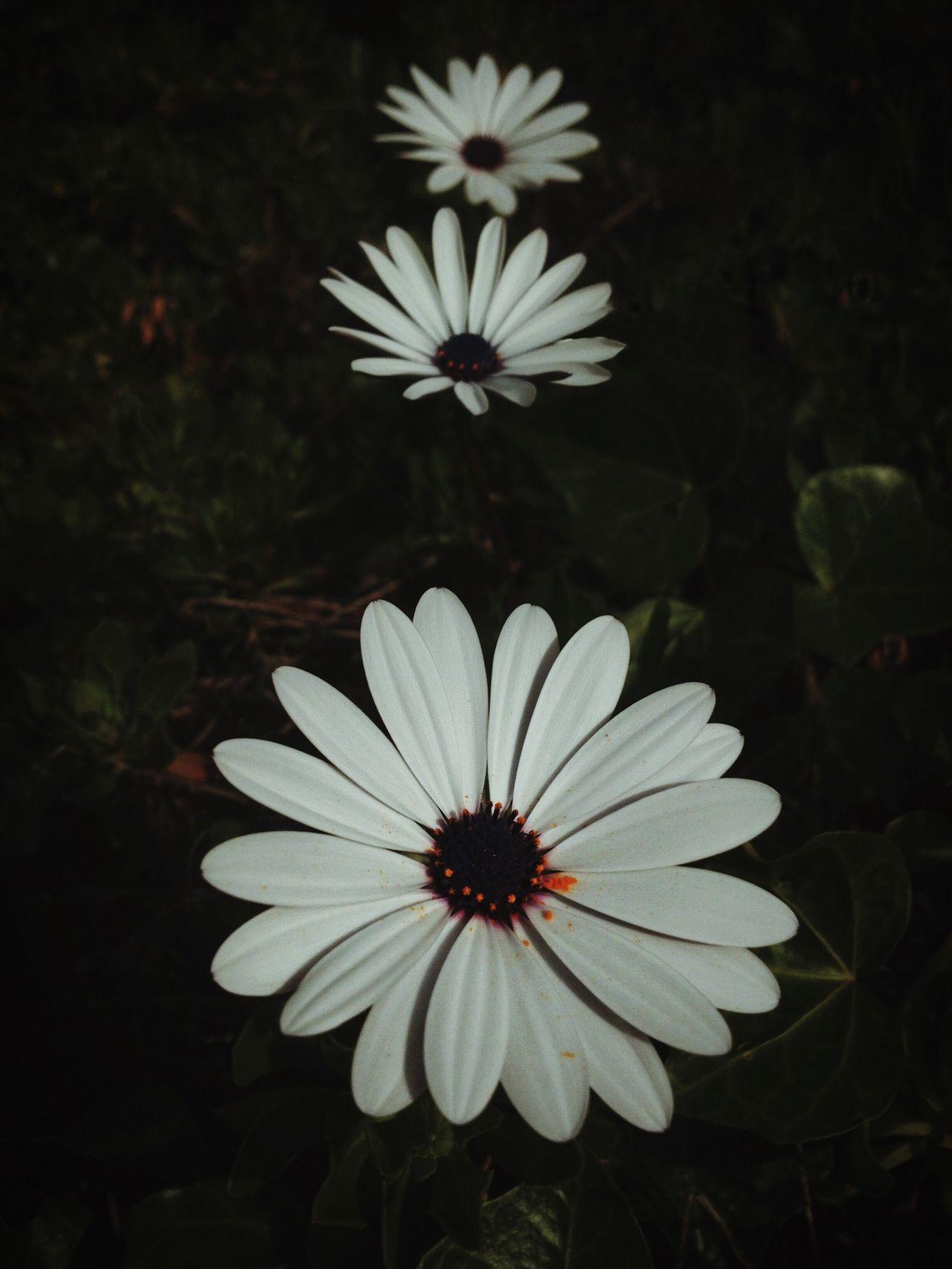 Write Something About You EyeEm Nature Lover EyeEm Best Shots - Nature Landscape Flowers