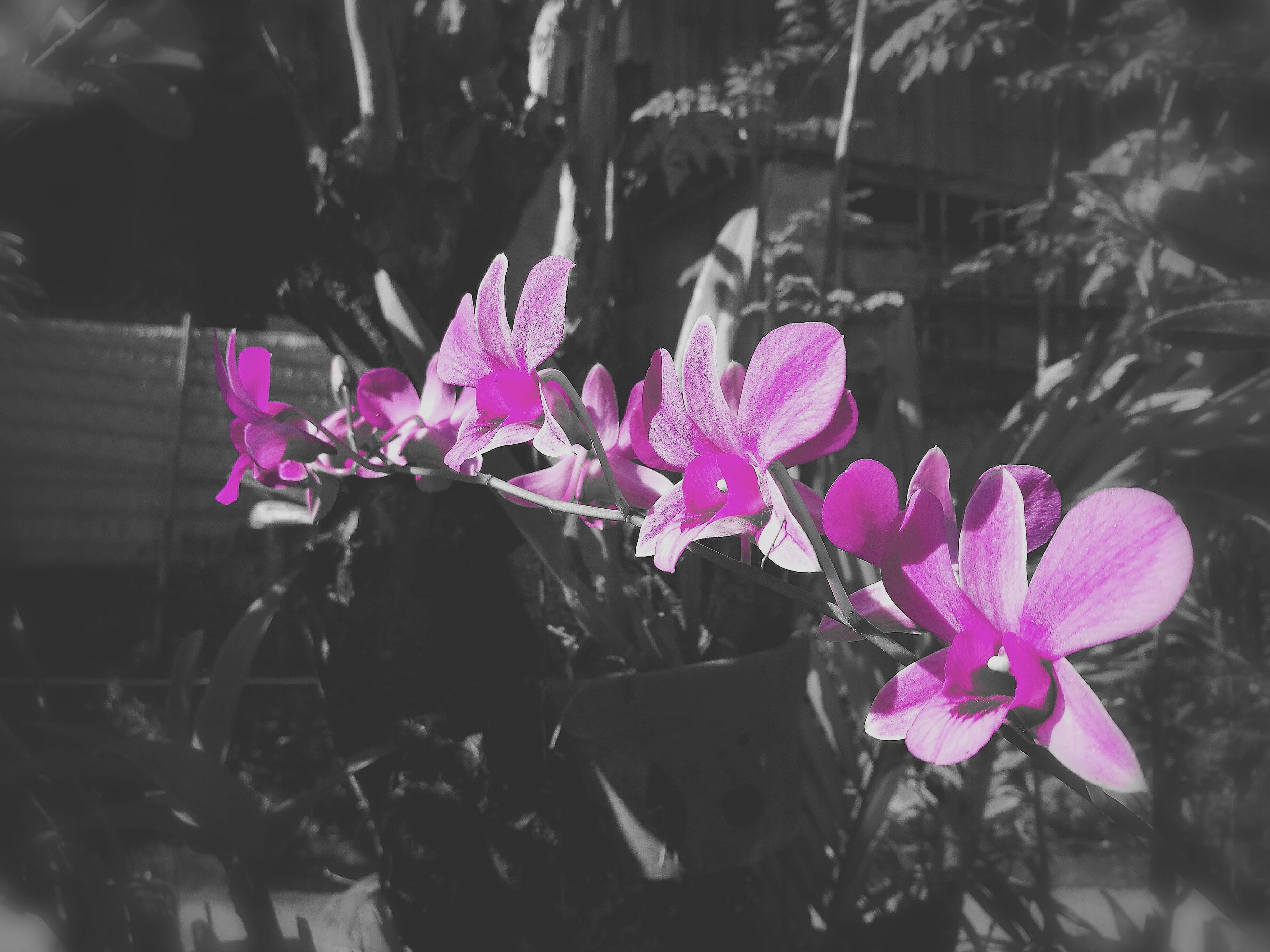 pink color, flower, nature, beauty in nature, fragility, purple, petal, freshness, water, no people, close-up, plant, growth, flower head, outdoors, day