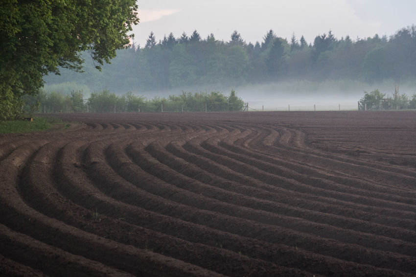 foggy field Agrarian Agriculture Curve Curves And Lines Field Fog Nature Plowed Field Trees