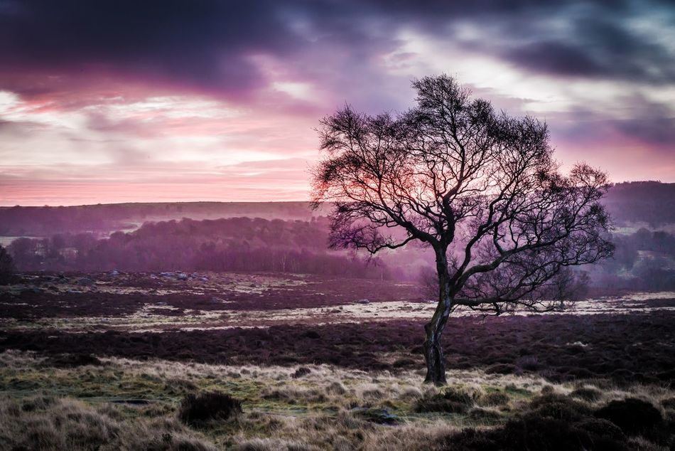 Sunrise out in the Peak District  Vivid Colours  Landscape Tree Lonely Fine Art Photography