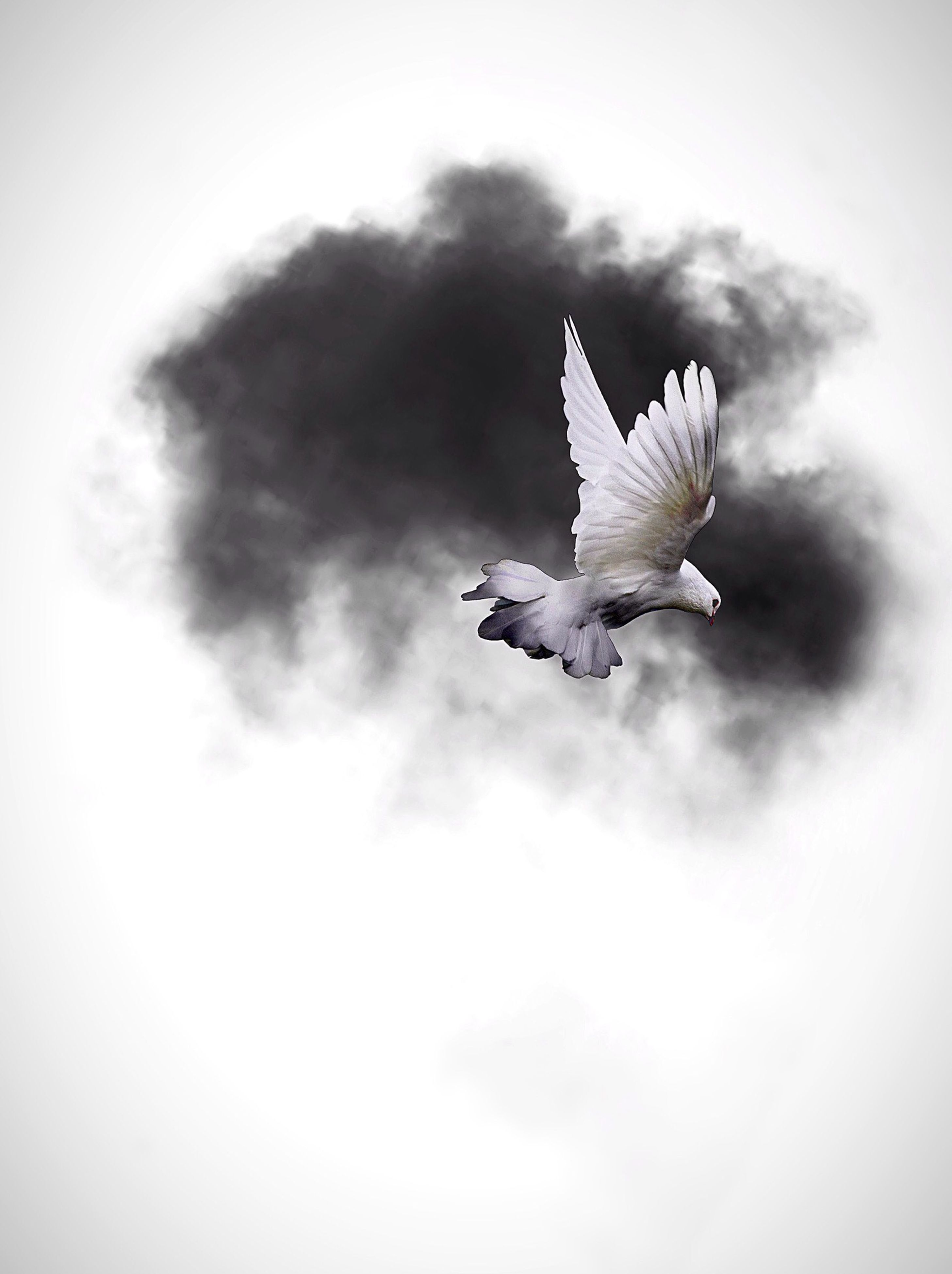 bird, animal themes, low angle view, sky, flying, animals in the wild, spread wings, wildlife, one animal, cloud - sky, cloudy, seagull, white color, mid-air, nature, cloud, day, beauty in nature, outdoors, animal wing