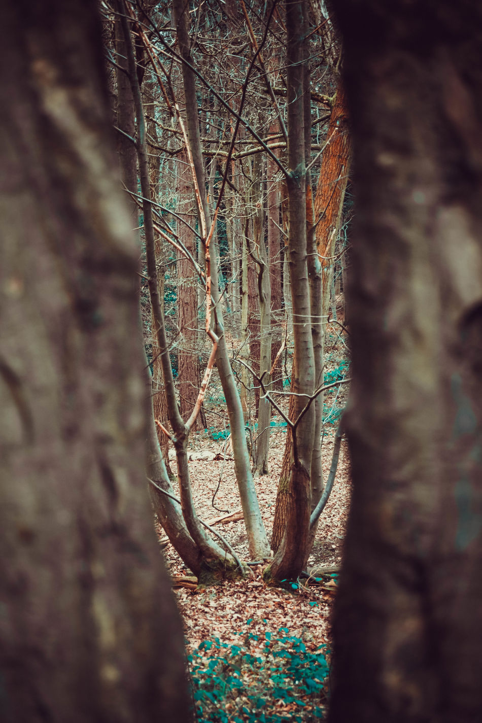 Beauty In Nature Branch Close-up Day Forest Growth Looking Through The Trees Lots Of Leaves Nature No People Outdoors Plant Tranquility Tree Tree Trunk Trees Vibrant Color Walk In The Forest Walk In The Woods WoodLand Narrow Viewpoint TCPM