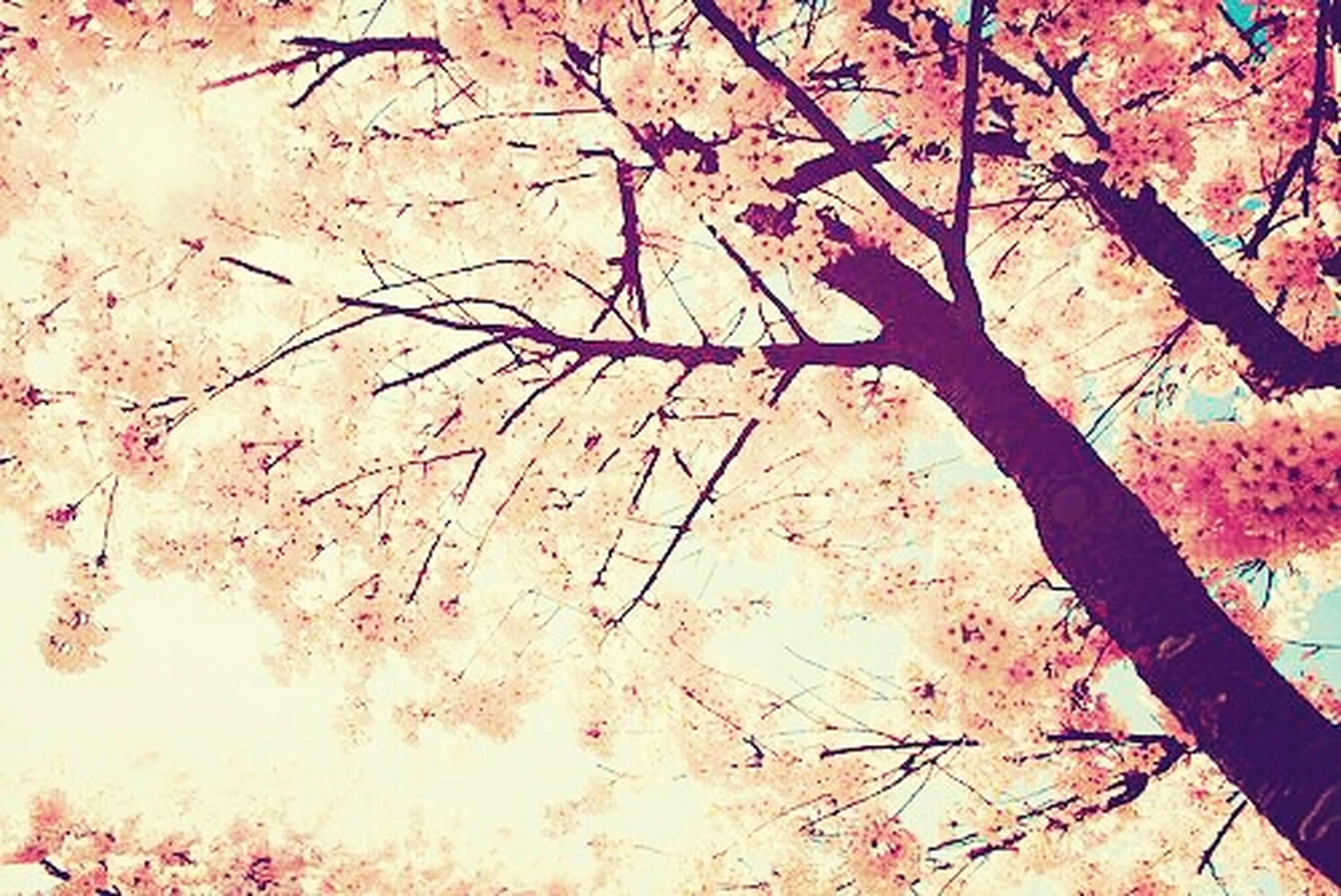 tree, autumn, branch, season, change, nature, growth, leaf, beauty in nature, tranquility, orange color, sunlight, red, outdoors, day, pink color, no people, scenics, low angle view, falling
