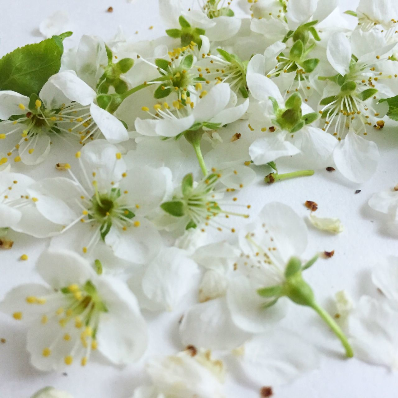 flower, white color, freshness, food and drink, food, no people, petal, close-up, fragility, flower head, leaf, indoors, backgrounds, nature, beauty in nature, day, ready-to-eat
