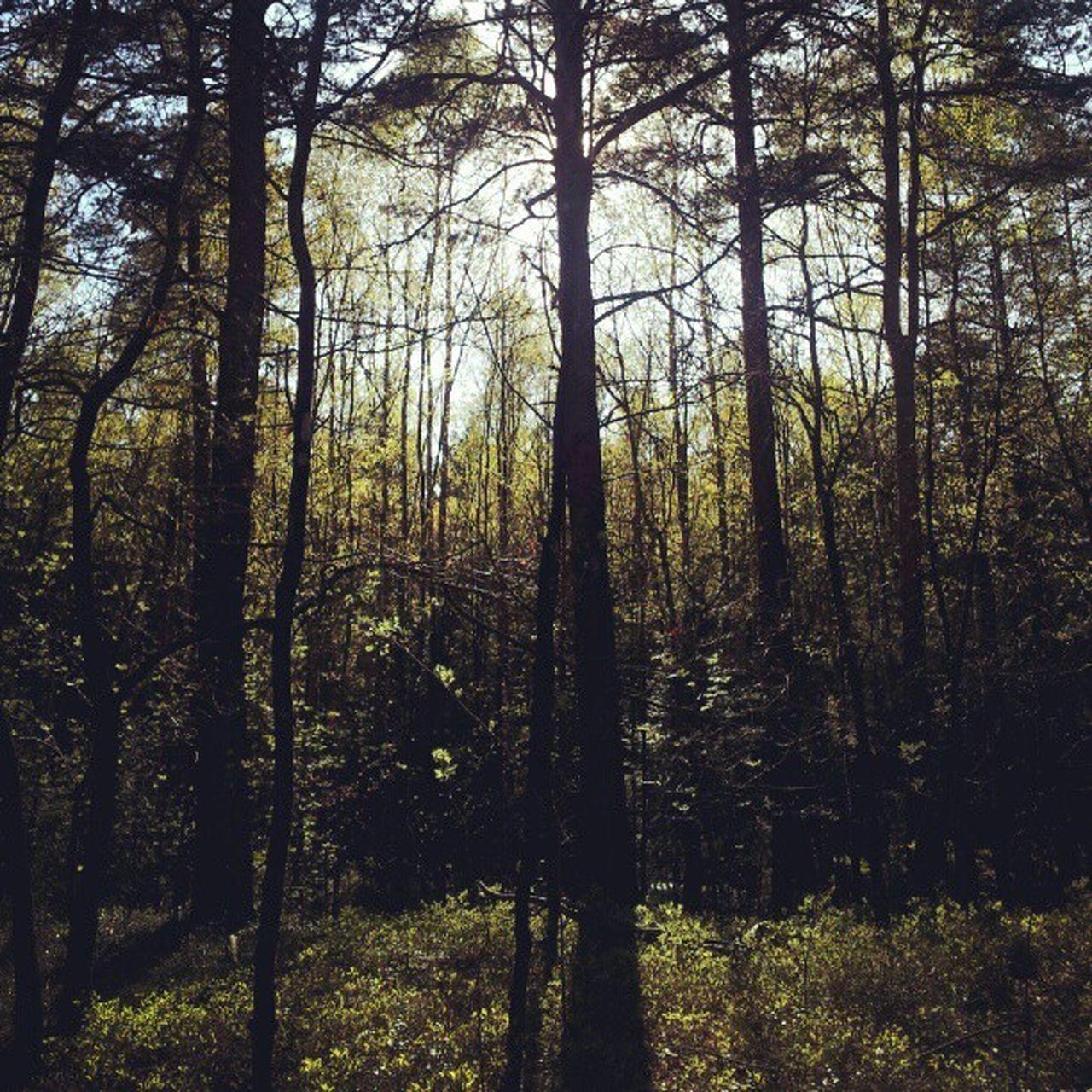 #Woods #trees #forest in #Gothenburg #Göteborg #Sweden #Sverige #dappled #sunlight Trees Sunlight Woods Forest Gothenburg Sweden Goteborg Dappled Sverige Ig_sweden Igersgothenburg