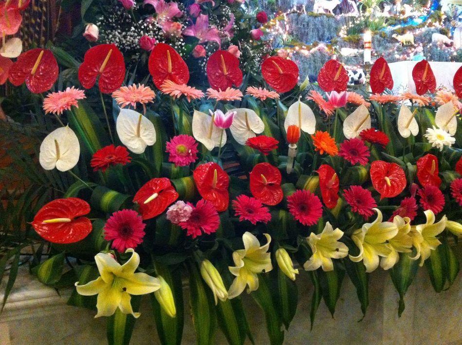 🌷 Flowers 🌹 Beauty Mexican Anturios