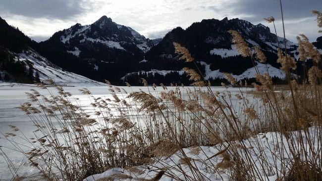 Windy Ice Snow Winter Lake Mountains Schwarzsee Lac Noir Switzerland Nature