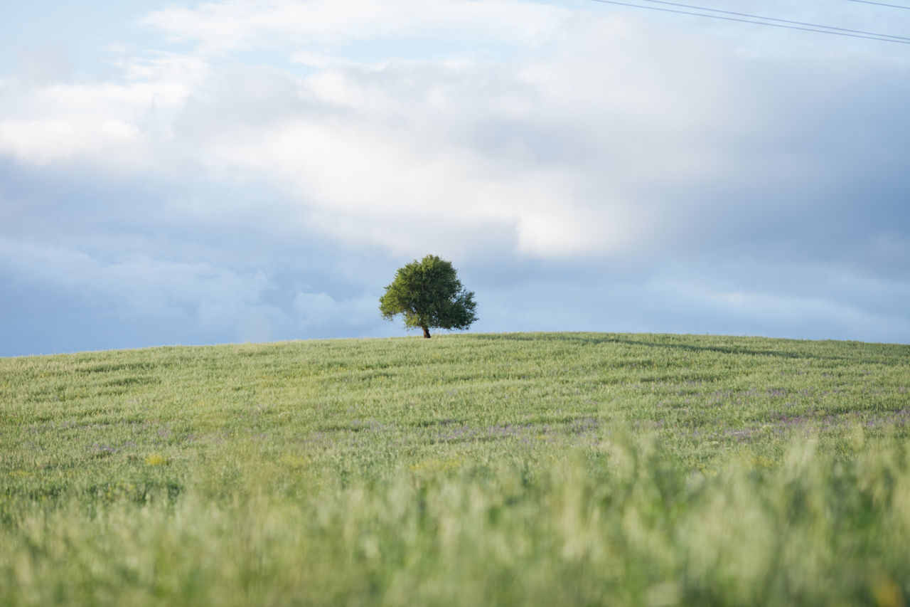 Agriculture Beauty In Nature Cloud - Sky Farm Field Freshness Grass Green Color Growth Landscape Lush Foliage Nature Nature No People Outdoors Plant Rural Scene Scenics Single Tree Sky Tranquil Scene Tranquility Tree Tree Wheat