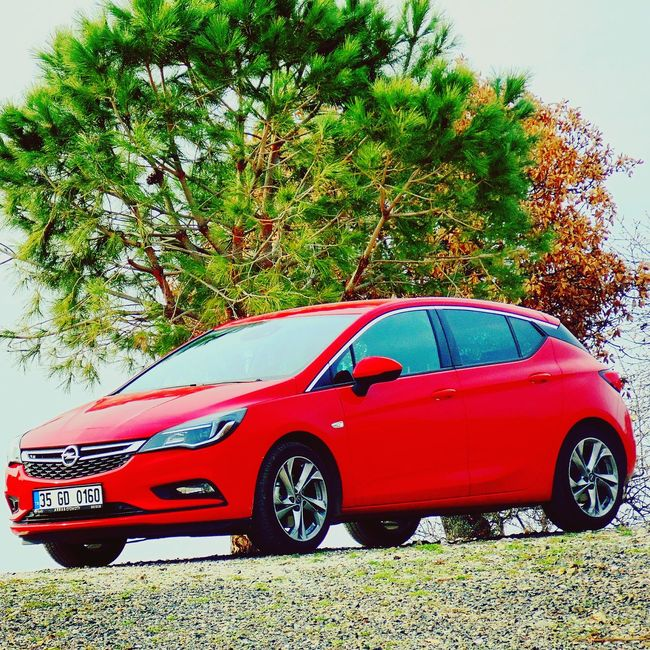 Opel Astra Nature Photography Macro First Eyeem Photo