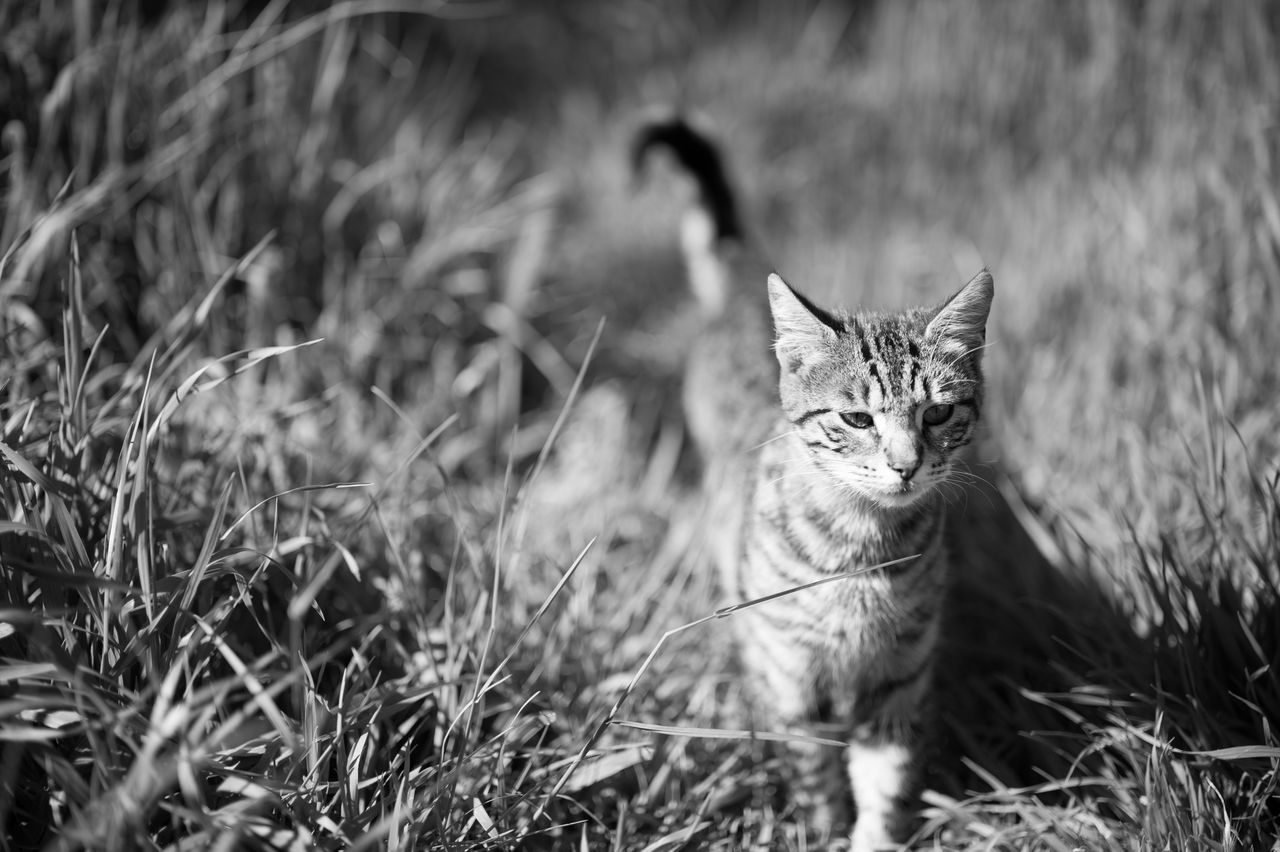 Stray Kitten in Grass III Animal Themes Black & White Black And White Blackandwhite Bokeh Cat Cats Day Domestic Cat Feline Focus On Foreground Grass Grassy Istanbul Istanbuldayasam Kitten Monochrome Nature One Animal Outdoors Pets Portrait Stray Cat