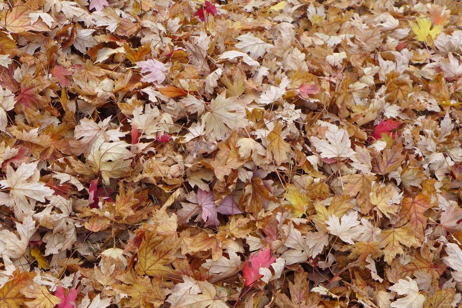 Beautiful stock photos of herbst, Abundance, Autumn, Autumn Collection, Backgrounds