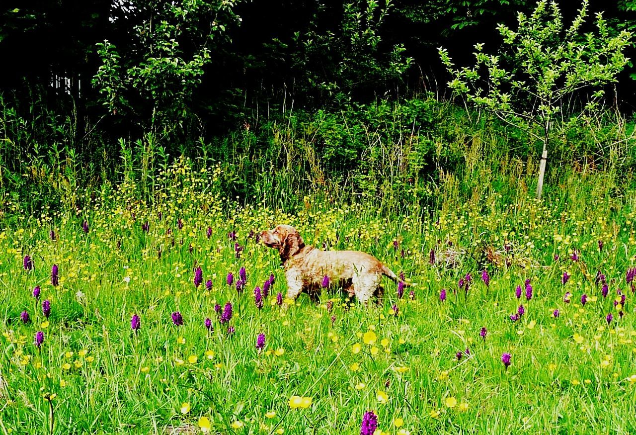 animal themes, grass, green color, nature, growth, mammal, no people, field, domestic animals, outdoors, plant, day, flower, one animal, beauty in nature, tree