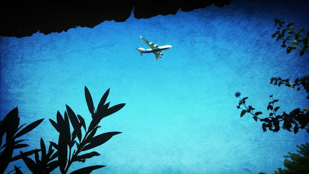 Only Blue Summer Plane