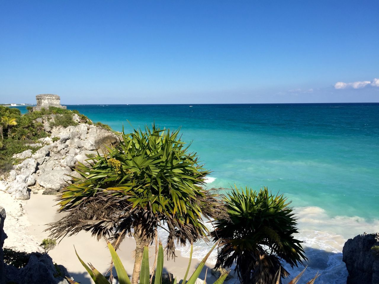 Beach Beauty In Nature Blue Clear Sky Coast Day Horizon Over Water Mexico Nature No People Outdoors Palm Tree Scenics Sea Sky Tranquility Tulum , Rivera Maya. Water